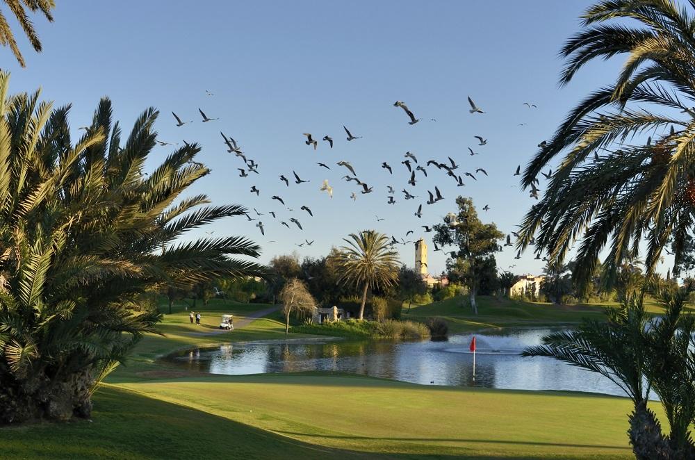 oiseaux au golf du soleil