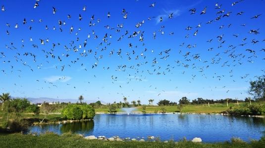 Le vol des oiseaux sur le golf de l'océan.