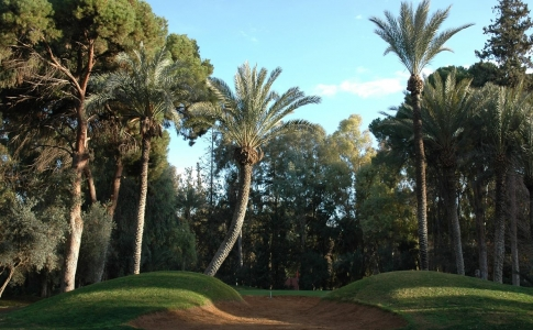 Les palmiers du Royal Golf Marrakech.