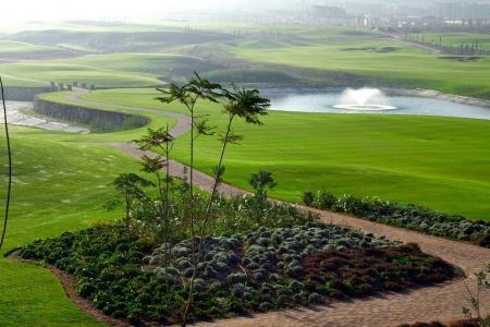Les palmiers du golf de Casa Green.