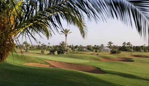 Le paysage sous un palmier du golf de Palmeraie.