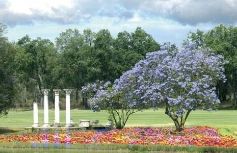 Les fleurs du golf le Royal Dar Es Salam.