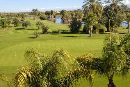 Les palmiers du golf de Palmeraie.
