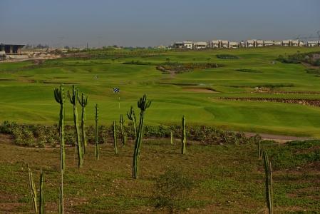 Les cactus du golf de Casa Green.