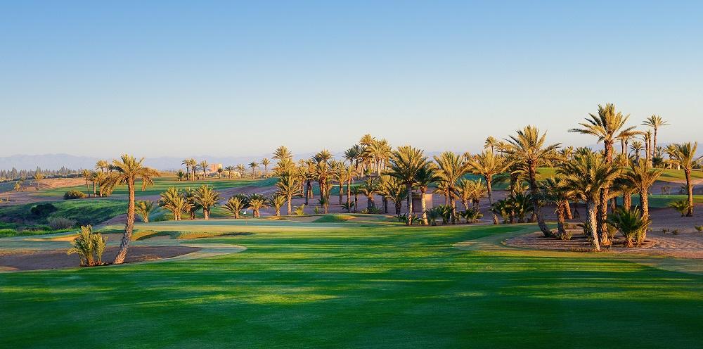 Les palmiers du  golf d'Assoufid.