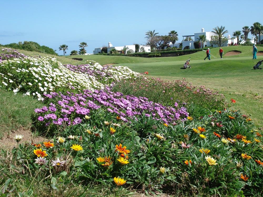 Les fleurs du golf d'El Jadida Royal.